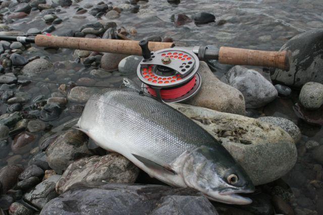 Fischarten-rotlachs